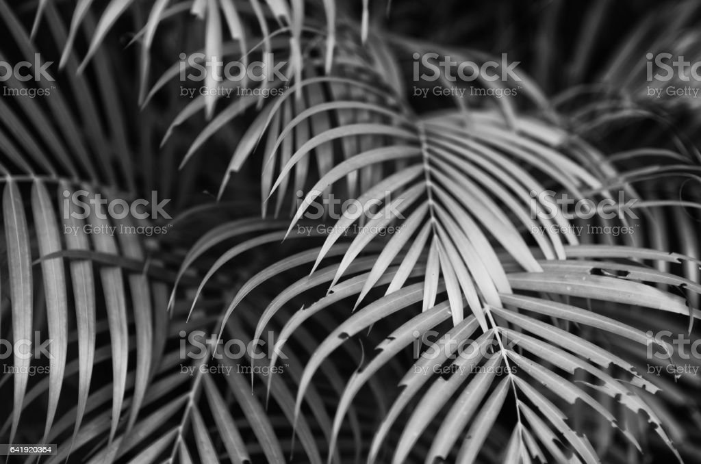 Palm Fronds Background stock photo