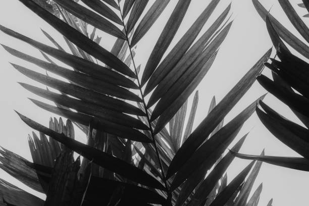 palm fronds in black and white - high contrast stock pictures, royalty-free photos & images