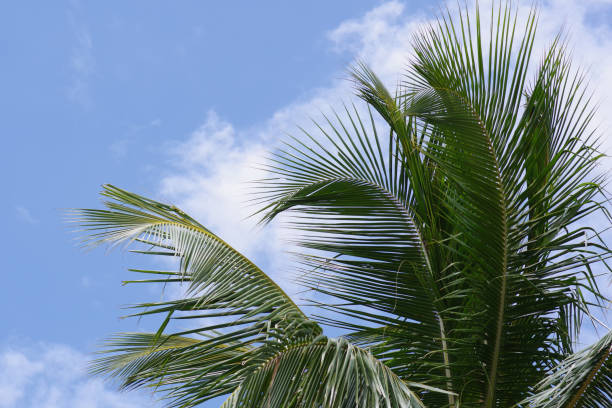 Palm fronds in front of blue sky stock photo