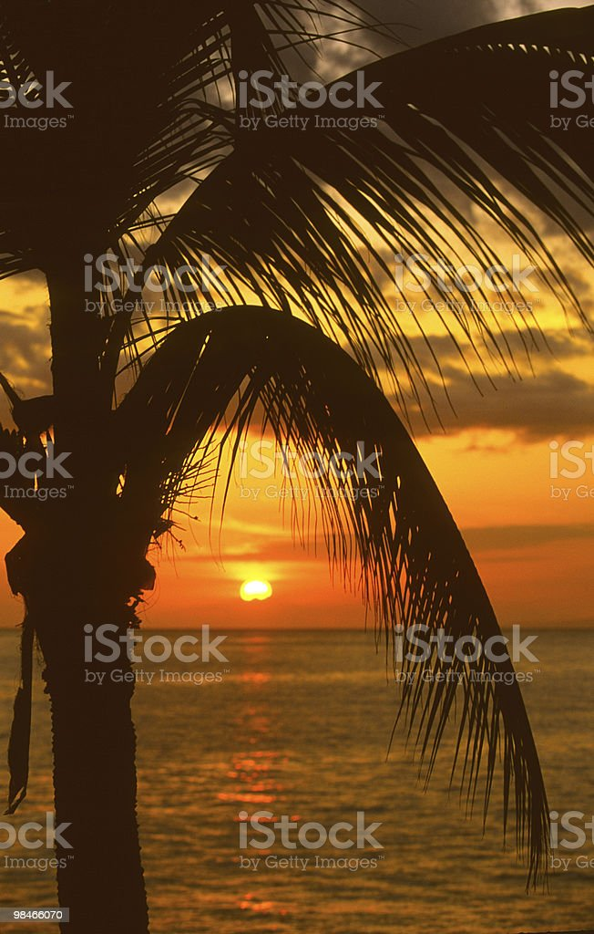 Palm Fronds in Sunset royalty-free stock photo
