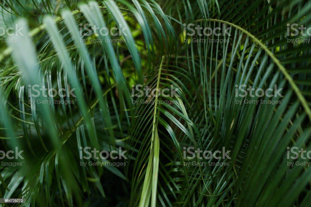 Palm green foliage background photo royalty-free stock photo