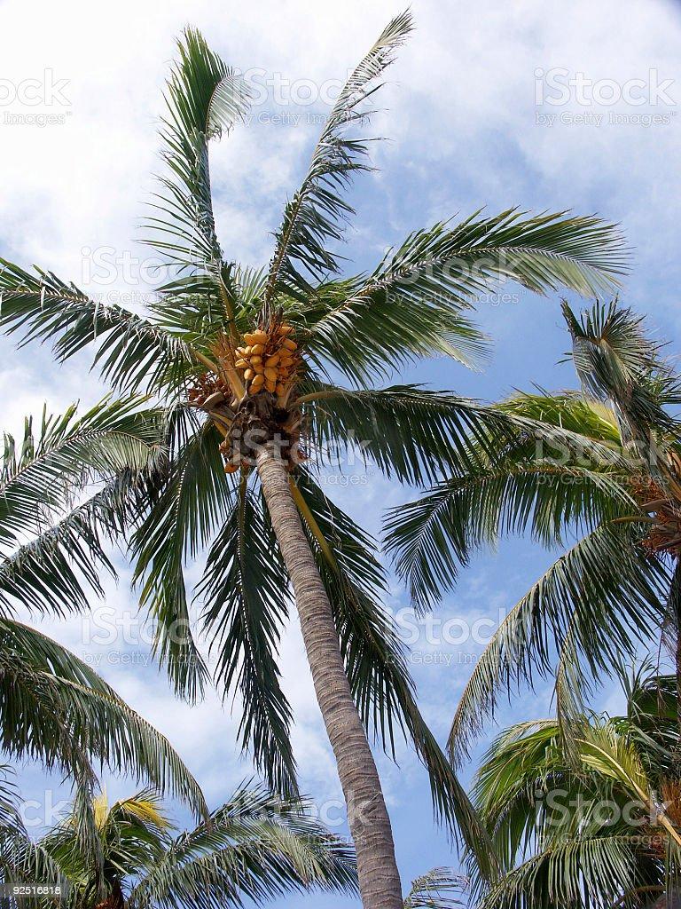 Palm Grove royalty-free stock photo
