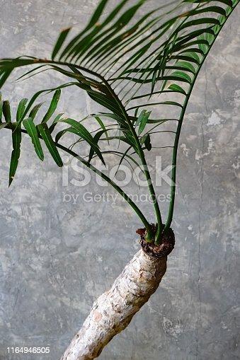 Thailand, Backgrounds, Botany, Branch - Plant Part, Bush