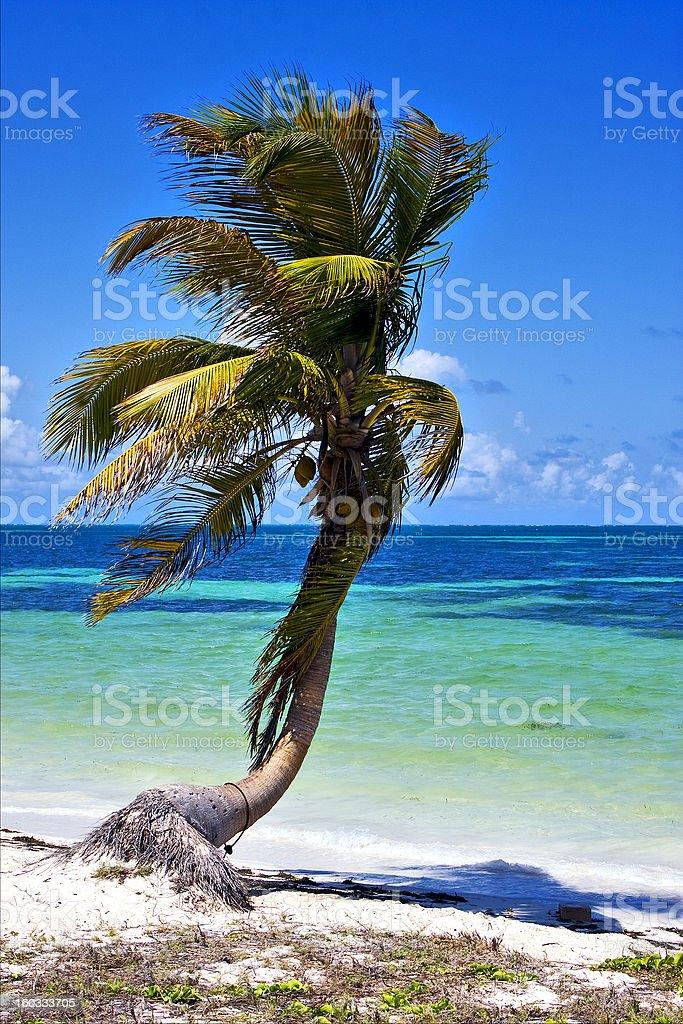 palm in sian kaan lagoon mexico stock photo