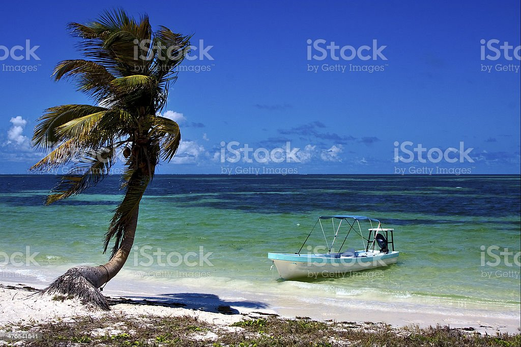 palm in the  blue lagoon  and boat stock photo