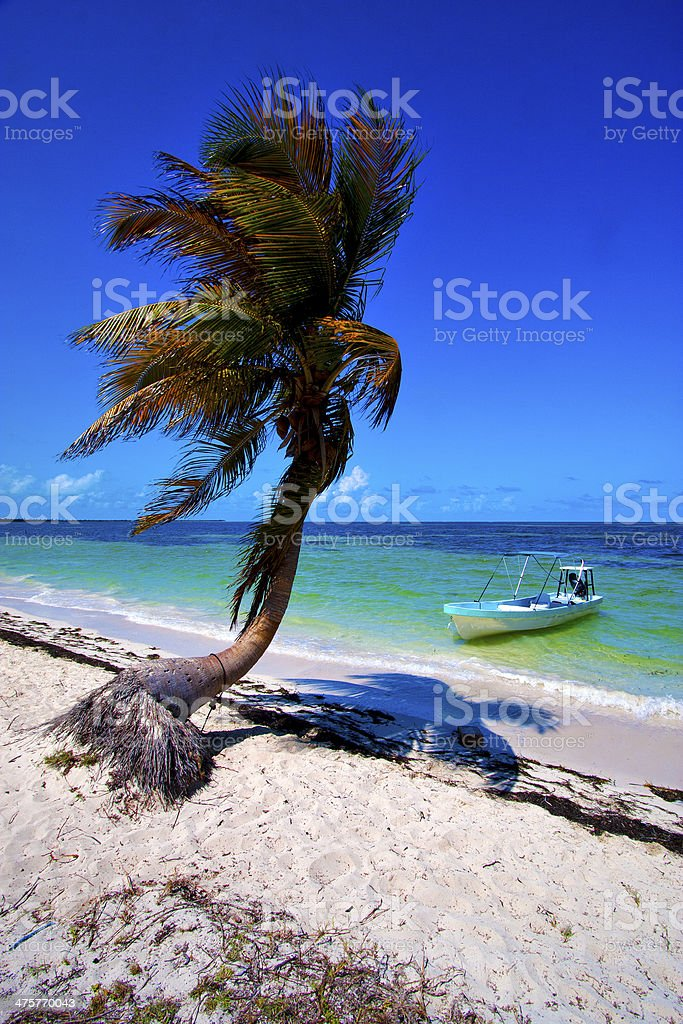 palm in the  blue lagoon relax and boat stock photo