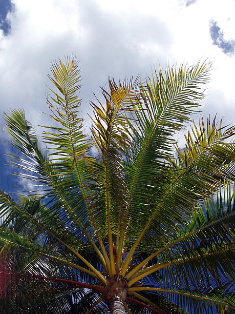 Palm in the Clouds stock photo