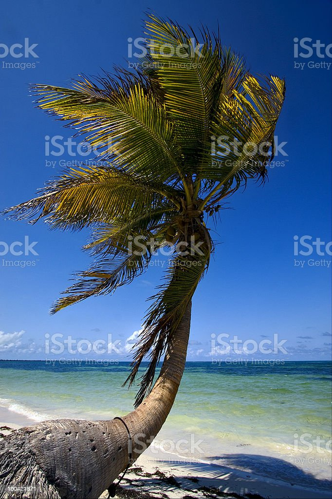 palm in the wind and blue lagoon mexico stock photo