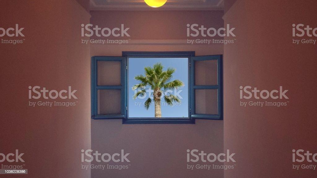 Palm in the window – zdjęcie