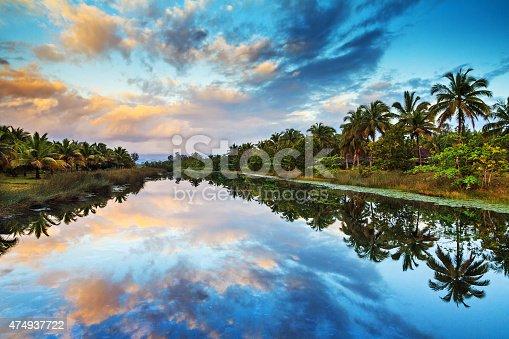 istock Palm lake reflections 474937722