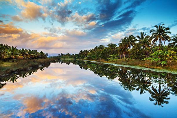 Palm lake reflections stock photo