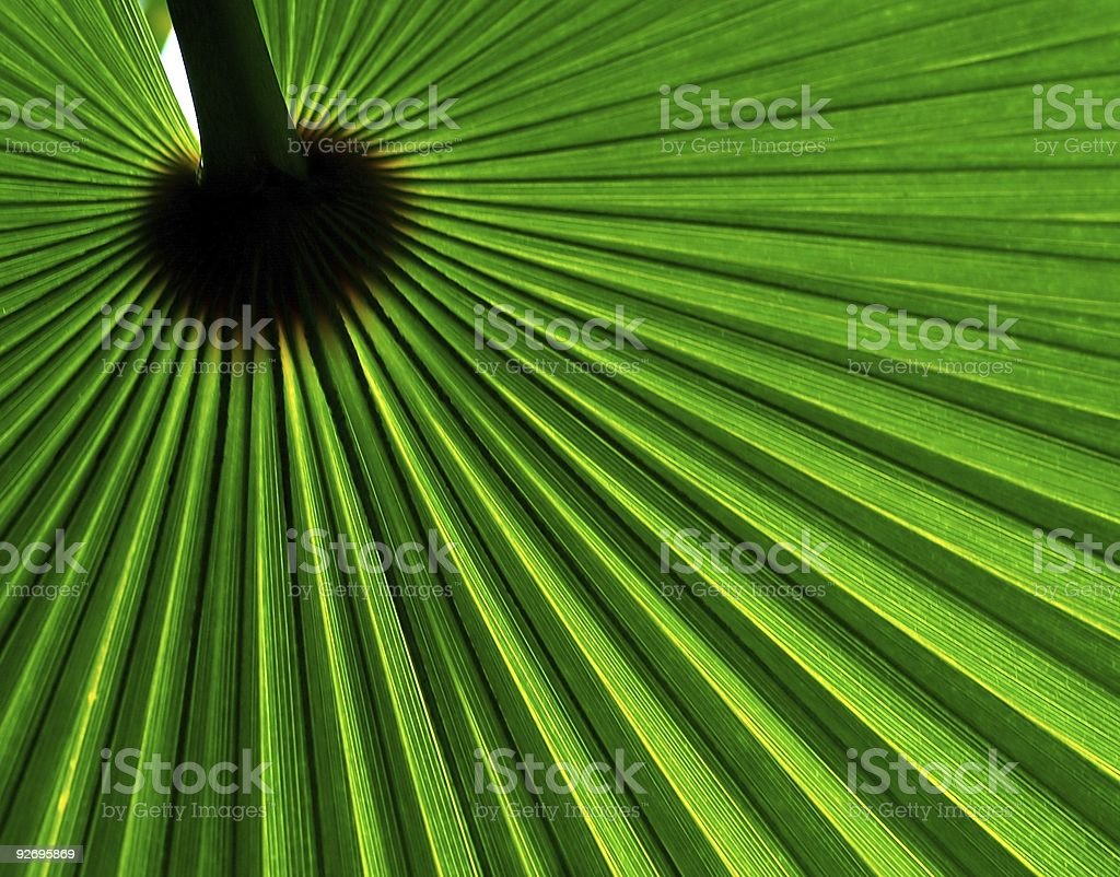 Palm leaf abstract - green royalty-free stock photo