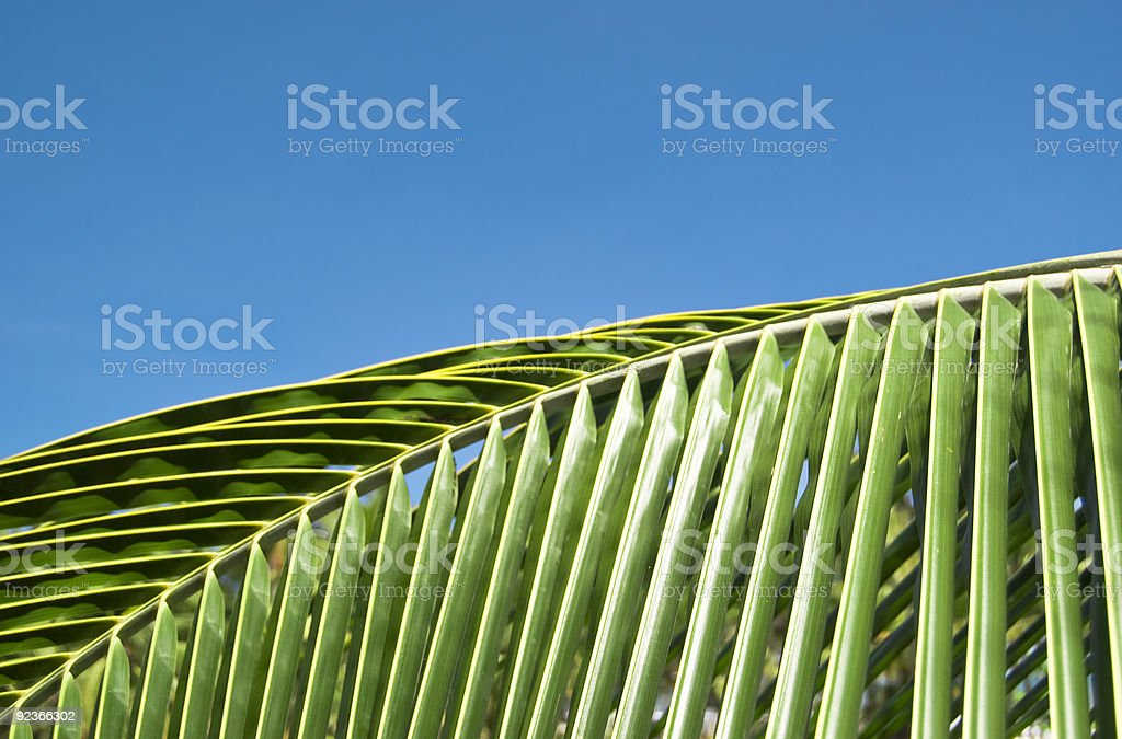 Palm leaf and blue sky royalty-free stock photo