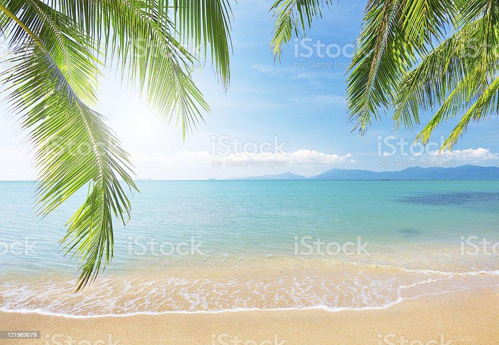 Palmenblätter und tropischen Strand – Foto