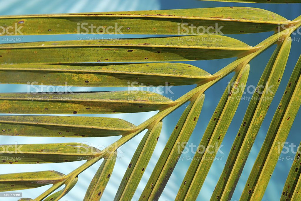 palm leaf and turquoise water royalty-free stock photo