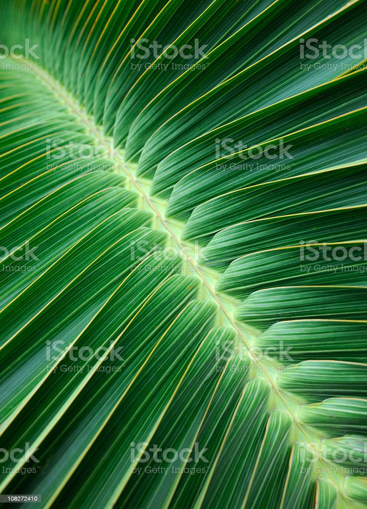 Palm Leaf Background (XXXL) stock photo