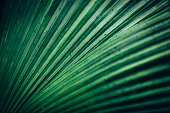 palm leaf background, full frame.