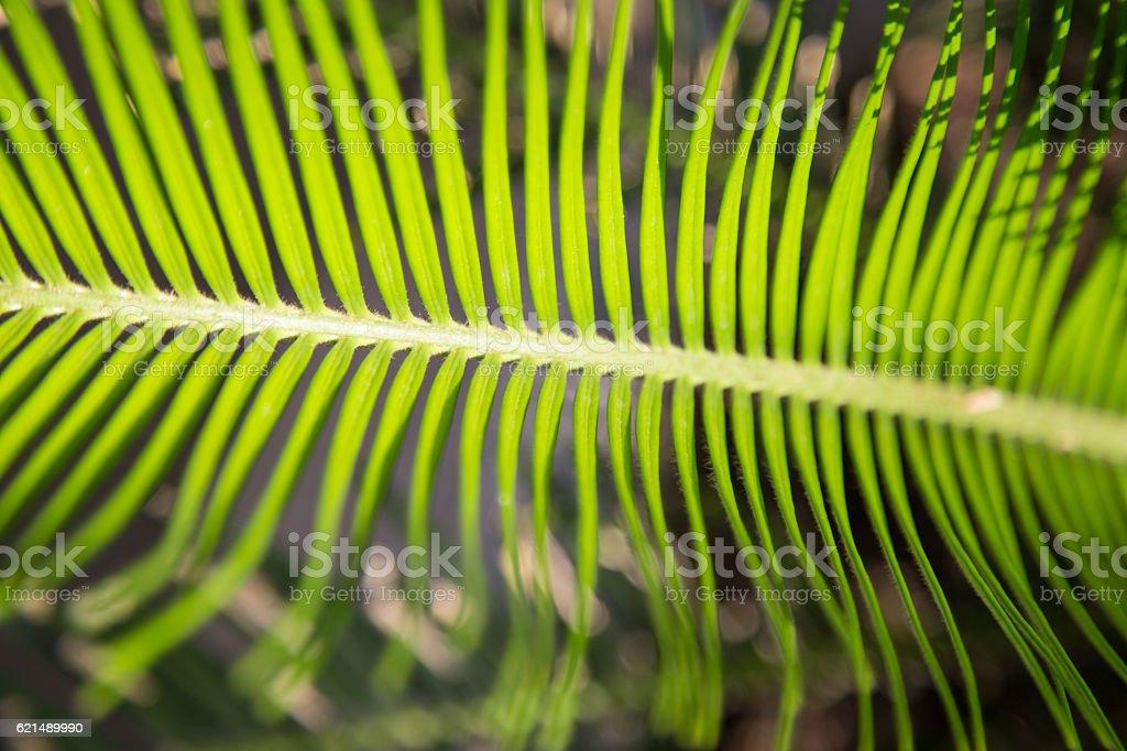 palm leaf Hintergrund Lizenzfreies stock-foto