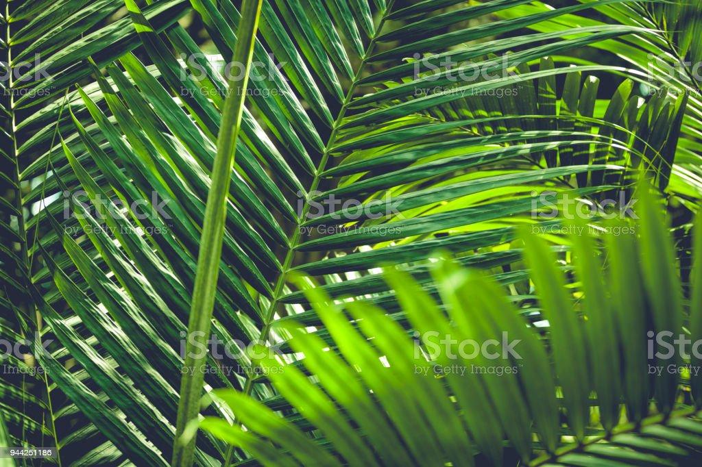 palm leaf background stock photo