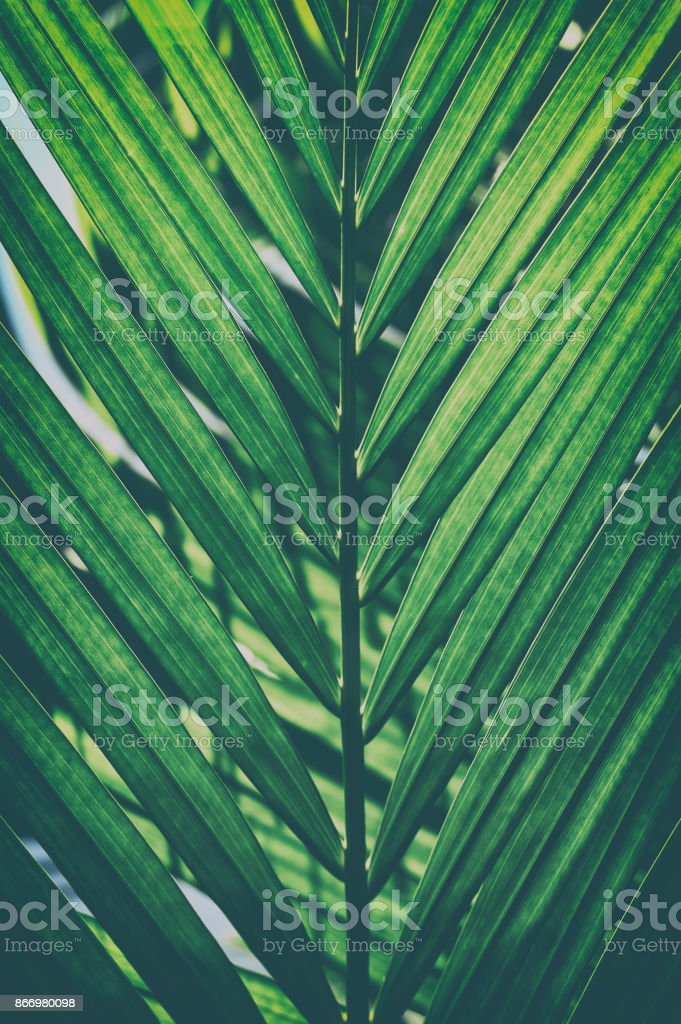 Palm leaf backgrounds stock photo