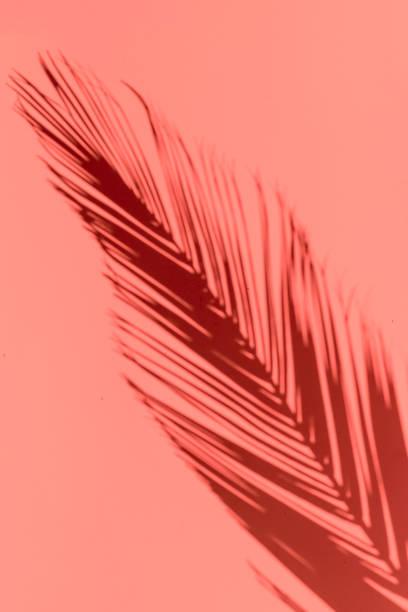palmblatt wirft schatten auf einen himmlischen hintergrund. niemand hintergrund - palmwedel stock-fotos und bilder