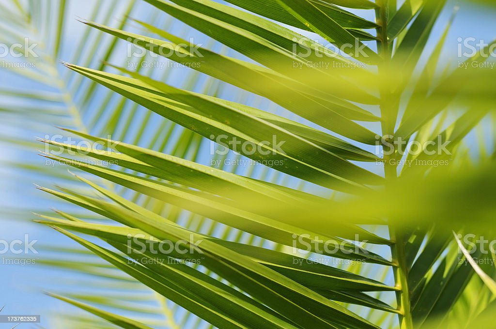 palm leaf close up, depth of field stock photo