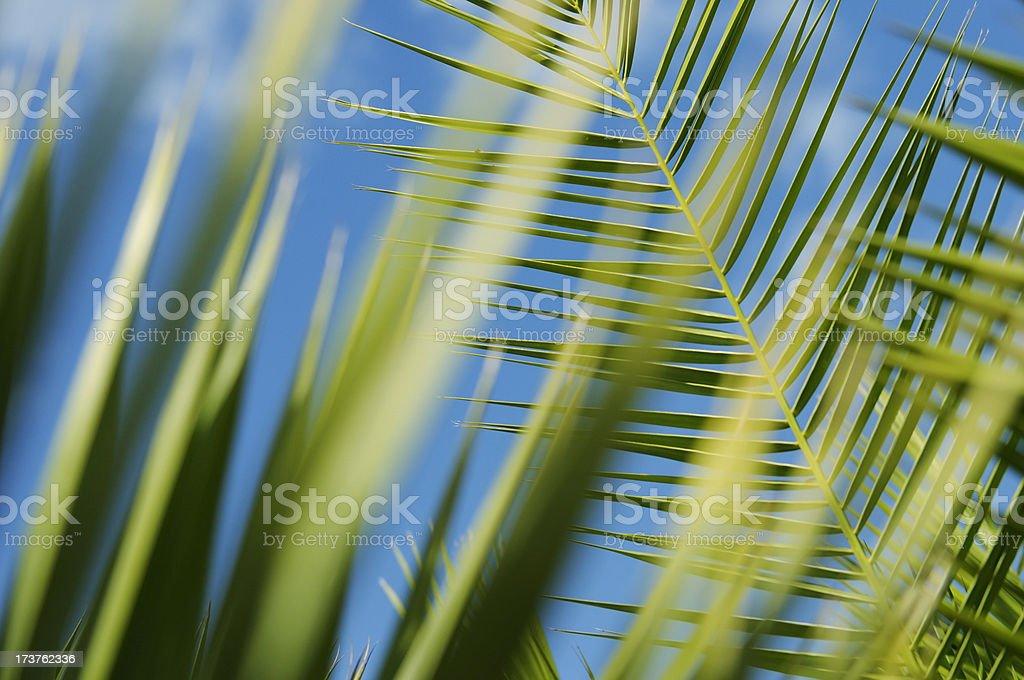 palm leaf close up stock photo
