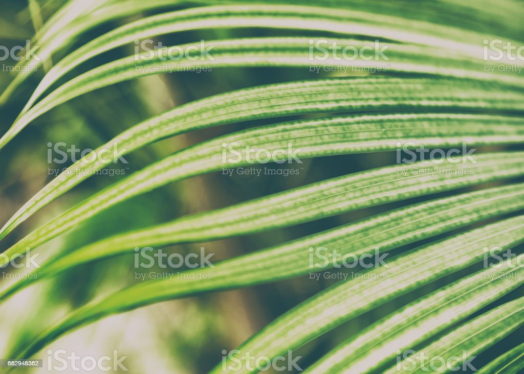 Palm leaf close-up royalty-free stock photo