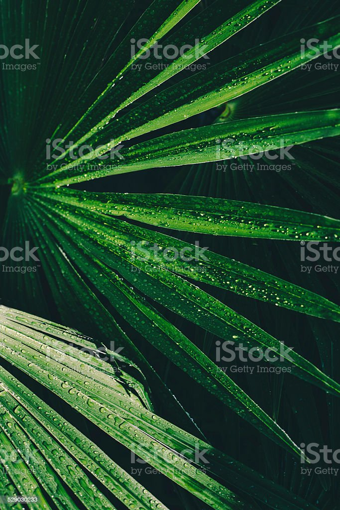 Palm leaf covered by dew stock photo
