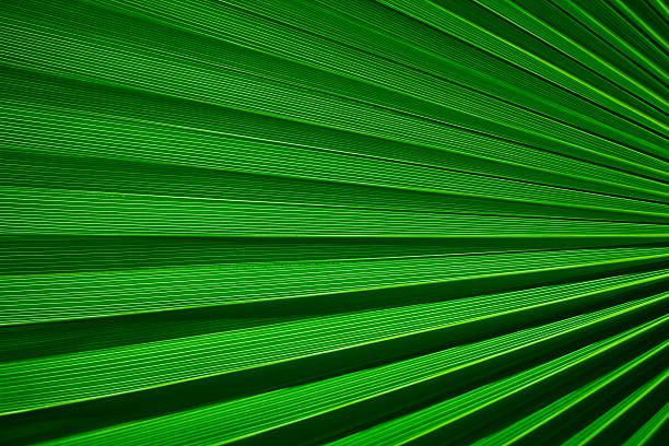 Palm Leaf Detail stock photo
