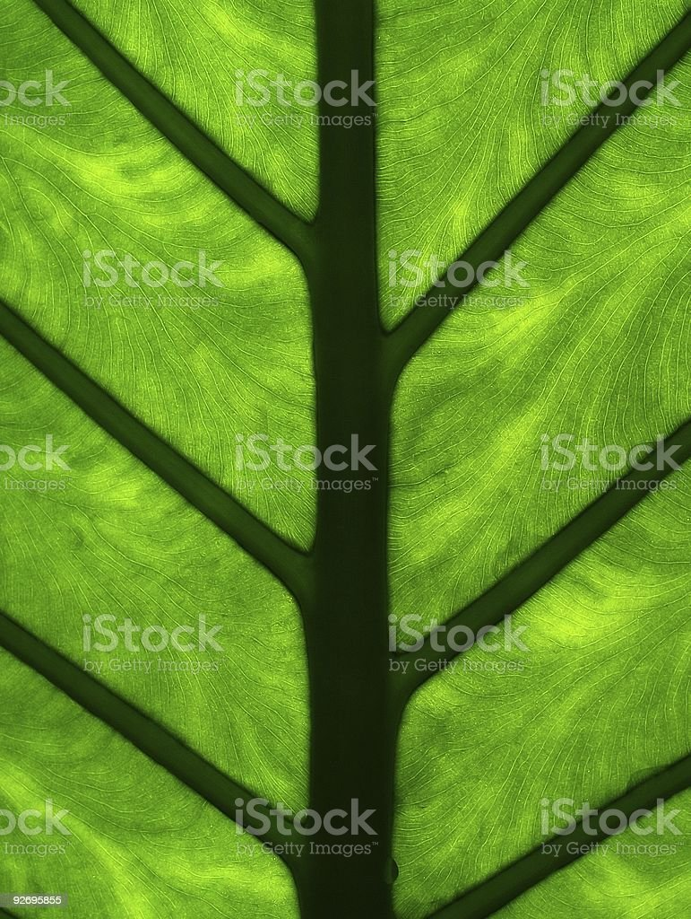 Palm leaf detail royalty-free stock photo