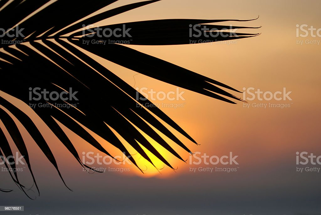 palm leaf in front of orange colored sunset royalty-free stock photo