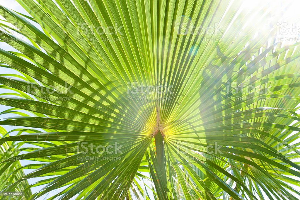 Palm leaf in glistening sun stock photo