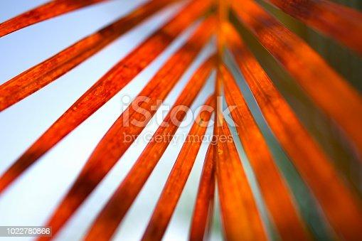 palm leaf in nature