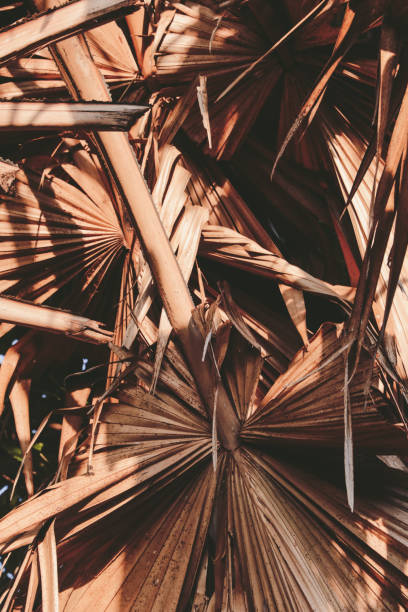 palm leaf in sunlight stock photo