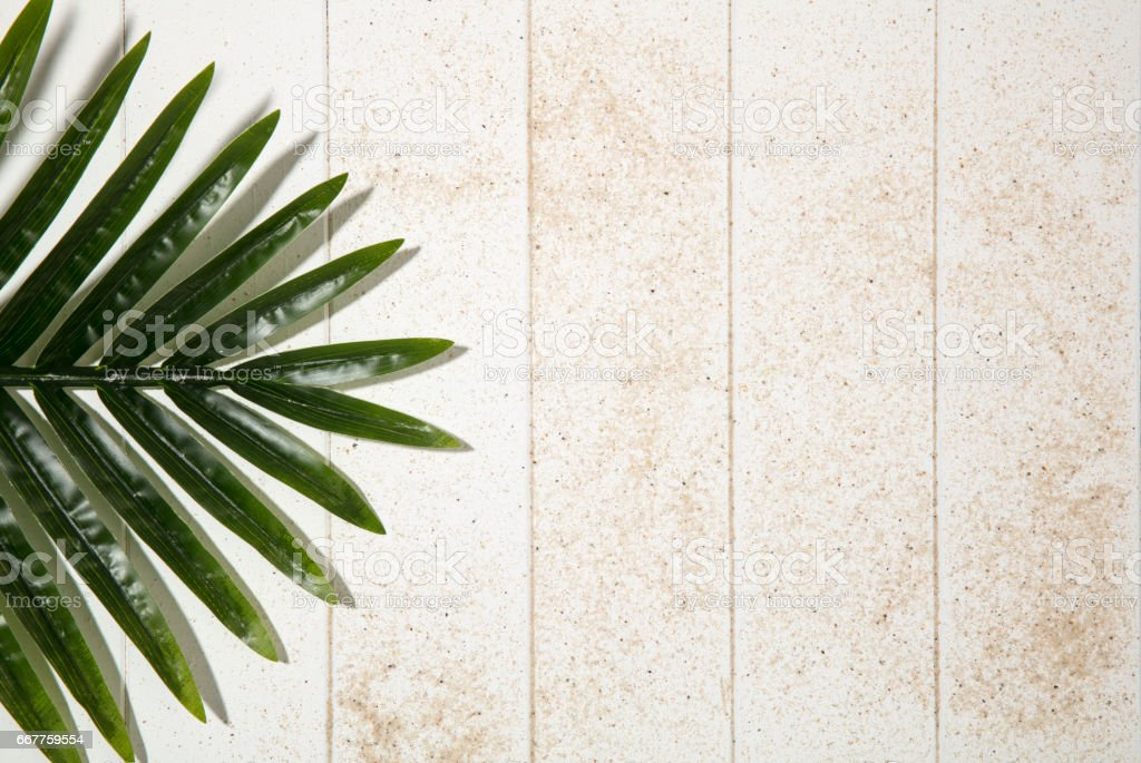 Palm Leaf on white wooden background stock photo