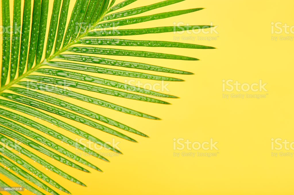 Palm leaf on yellow paper background royalty-free stock photo