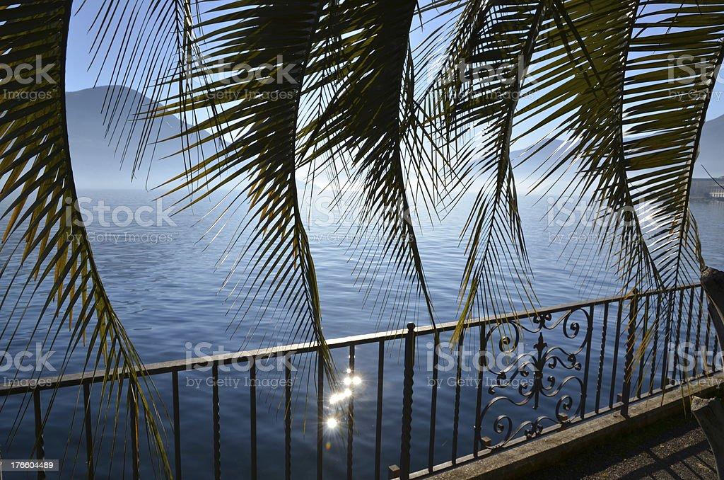 Palm leaf royalty-free stock photo