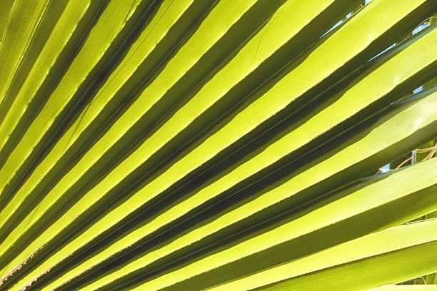 Palm leaf – Foto