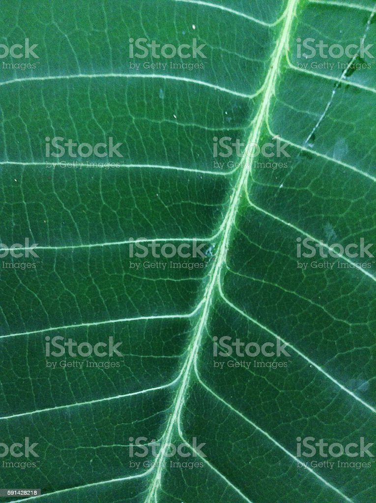 Palm Leaf stock photo