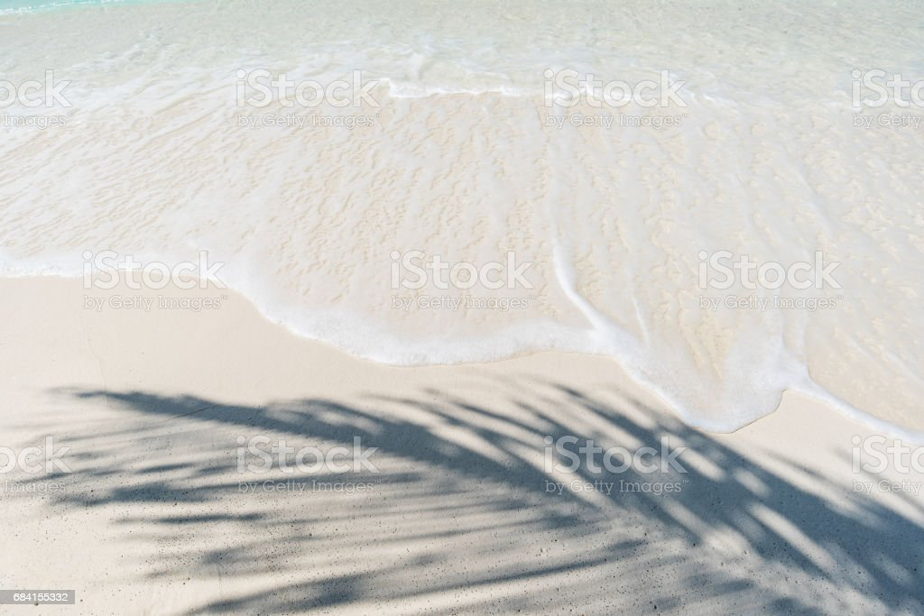 Palm leaf shadow and sea waves foto stock royalty-free