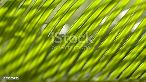 istock Palm Leaf Sunlight Abstract Background Summer Tropical Bright Striped Grid Pattern Shadowplay Bokeh Reflection Glowing Dappled Light Shadow 16x9 Format 1283070933