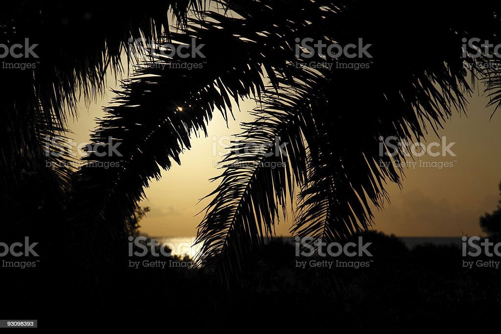 Palm Leaf Sunrise royalty-free stock photo