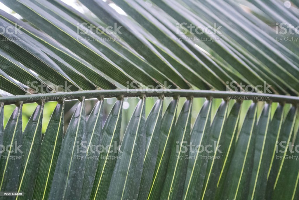 Palm leaf texture, dark green natural background. royalty-free 스톡 사진