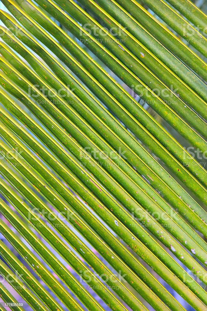 Palm leaf texture royalty-free stock photo