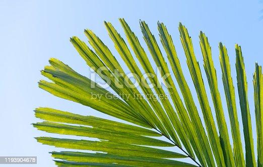 1145102719 istock photo Palm leaf under blue sky 1193904678
