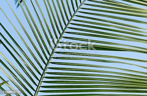 1145102719 istock photo Palm leaf under blue sky 1193904770