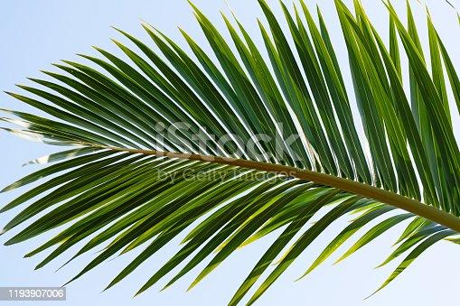 1145102719 istock photo Palm leaf under blue sky 1193907006