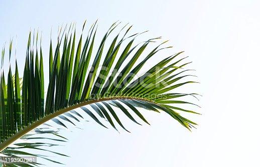 1145102719 istock photo Palm leaf under blue sky 1193907981