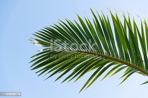 1145102719 istock photo Palm leaf under blue sky 1193908276